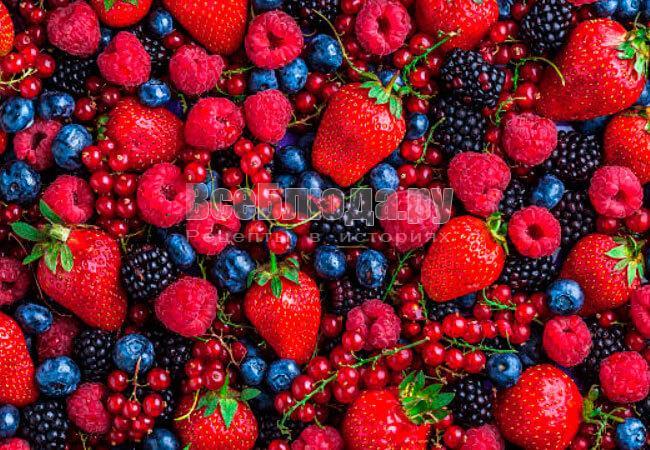 Где в Москве купить ягоды оптом