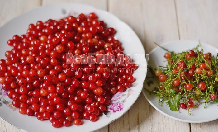 Морс из красной смородины с мелиссой, пошаговый рецепт с фото