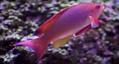 Всё о пользе морской рыбы:сколько её есть и как...