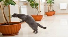 Зоогостиница Сэр Кот – лучшие условия для передержки котов и кош...