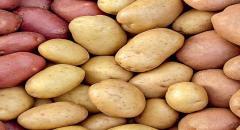 Топ-5 ошибок хранения картофеля